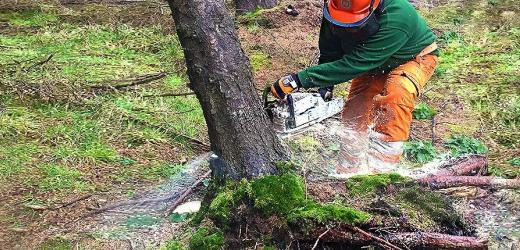 SEVERING UPROOTED OR WINDBLOWN TREES USING A CHAINSAW
